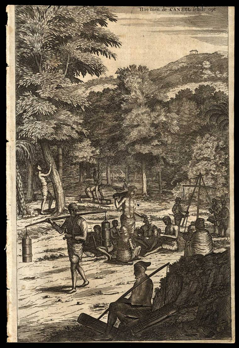 farmers working on producing cinnamon